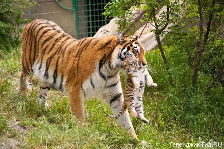 safari-park-gelendzhik