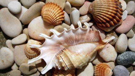 Морские камушки и ракушки