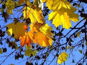 Осень в Геленджике